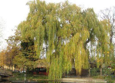 hackneytrees
